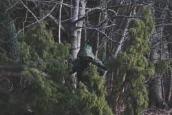 Gemino Predator
